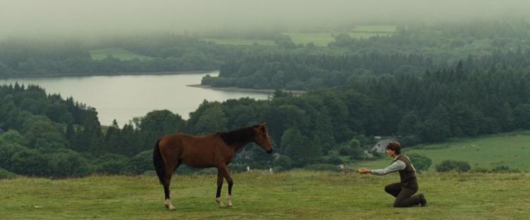 warhorse017
